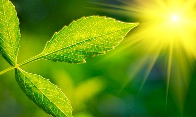 Photosynthesis Mystery Unraveled